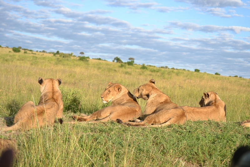 Kenya Lodge Safari group joining