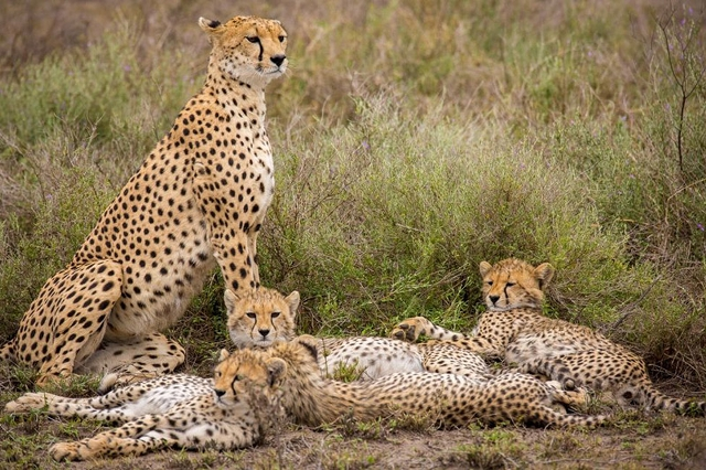 African Safari Holiday In Kenya and Tanzania