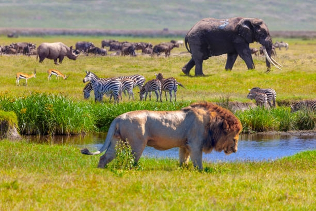 Kenya Tanzania Tour Package