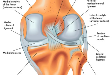 Interior ligament knee pain hd images wallpaper for downloads causes symptoms of knee pain how to treat them acl pain causes of posterior knee pain sports knee therapy posterior knee pain calf knee ligaments cruciates ccuart Choice Image