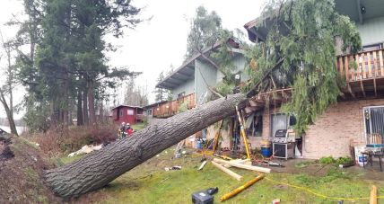 Puget Sound Fire House Tree Rescue (5)