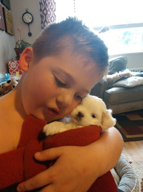 Lhasa Apso puppies socialized by children make better pets.