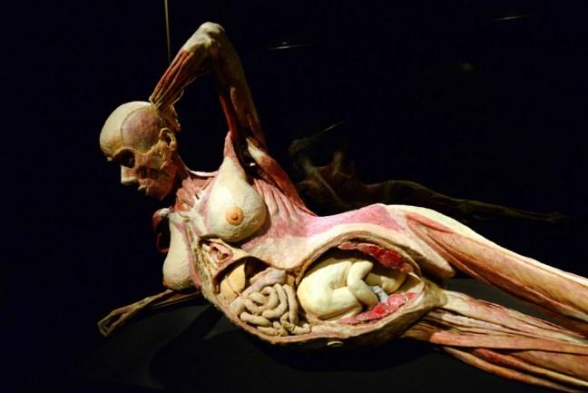 corpo umano organi