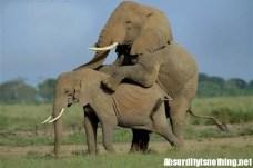 19-Amazing-Animals-Captured-While-Making-Love-008
