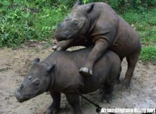 19-Amazing-Animals-Captured-While-Making-Love-009