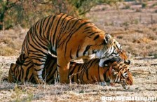 19-Amazing-Animals-Captured-While-Making-Love-010