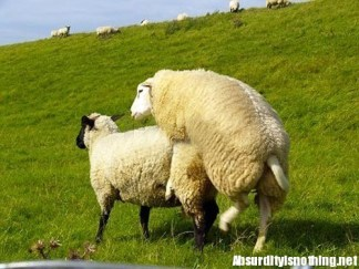 19-Amazing-Animals-Captured-While-Making-Love-014
