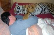 Enzo, la tigre domestica (2)