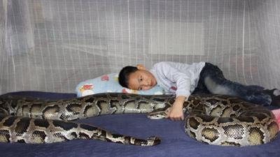 Bimbo cinese ha un pitone come babysitter (1)