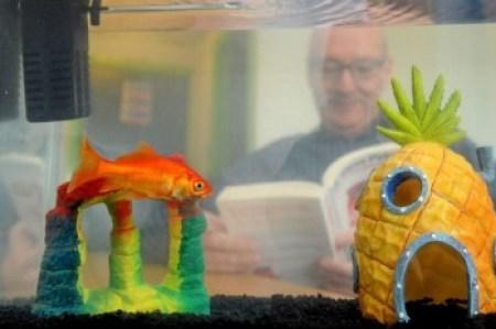 Hotel offre pesci rossi per fare compagnia ai clienti solitari