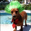Parrucche per animali domestici (5)