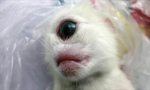 Nasce gatto con un occhio solo e senza naso (1)