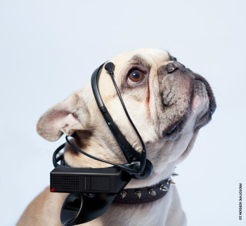"""In fase di sviluppo un traduttore """"cane-inglese"""" (1)"""