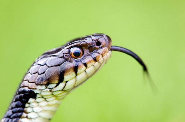 Usa un bagno pubblico e viene morso da un serpente