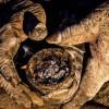 L'uomo più sporco del mondo, non si lava da 60 anni (2)