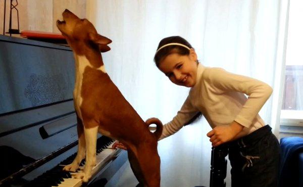 Cane suona il pianoforte e canta