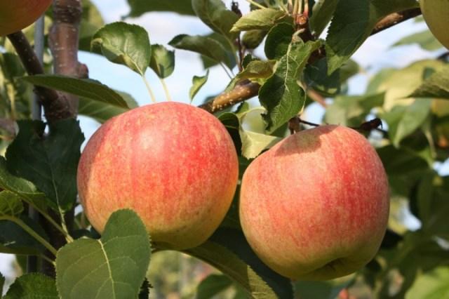 Paradis Sparkling, la mela frizzante (1)