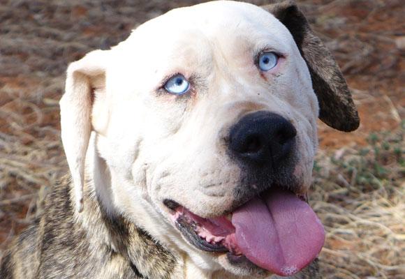 Boof, il cane sosia di John Travolta (2)
