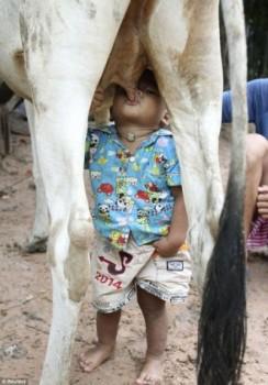 Bimbo cambogiano allattato da un mucca