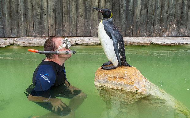 pinguina-paura-acqua