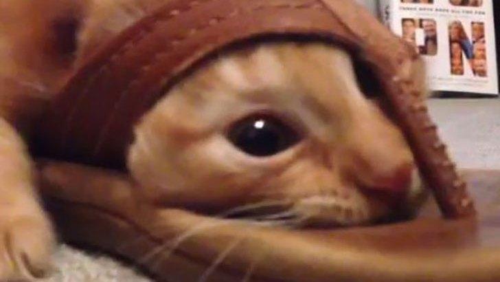 Video virale, gatto incastrato nelle infradito