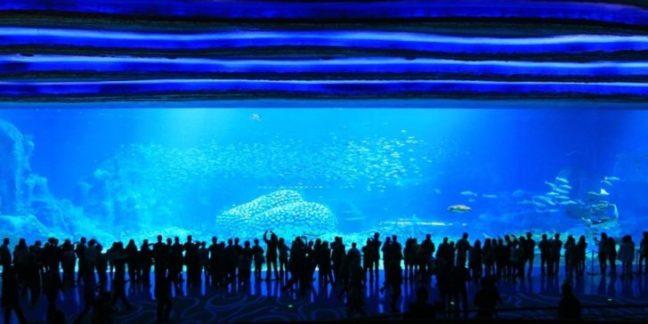Ocean Kingdom acquarium1