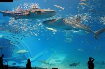 Acquario più grande del mondo