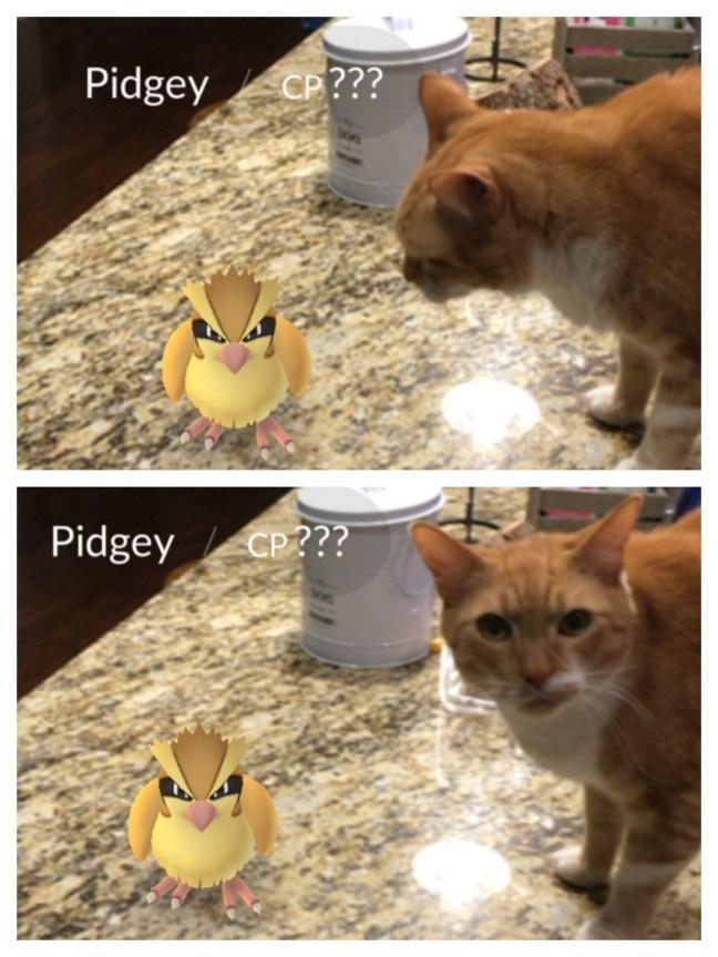 pokemonGO7
