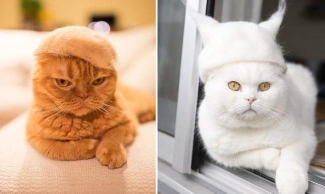 gatti-cappelli-pelo-3