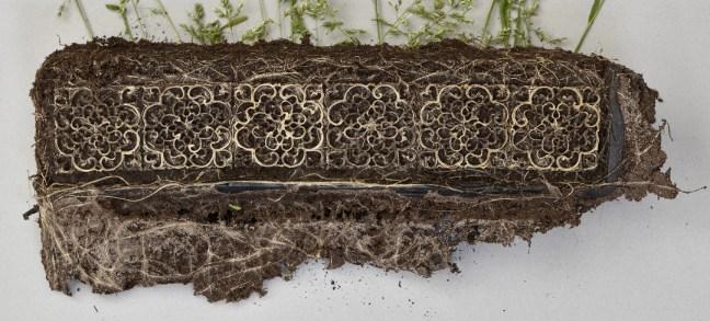 radici-piante-fantasie