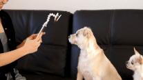 flexy-paw-smartphone-premietti-7