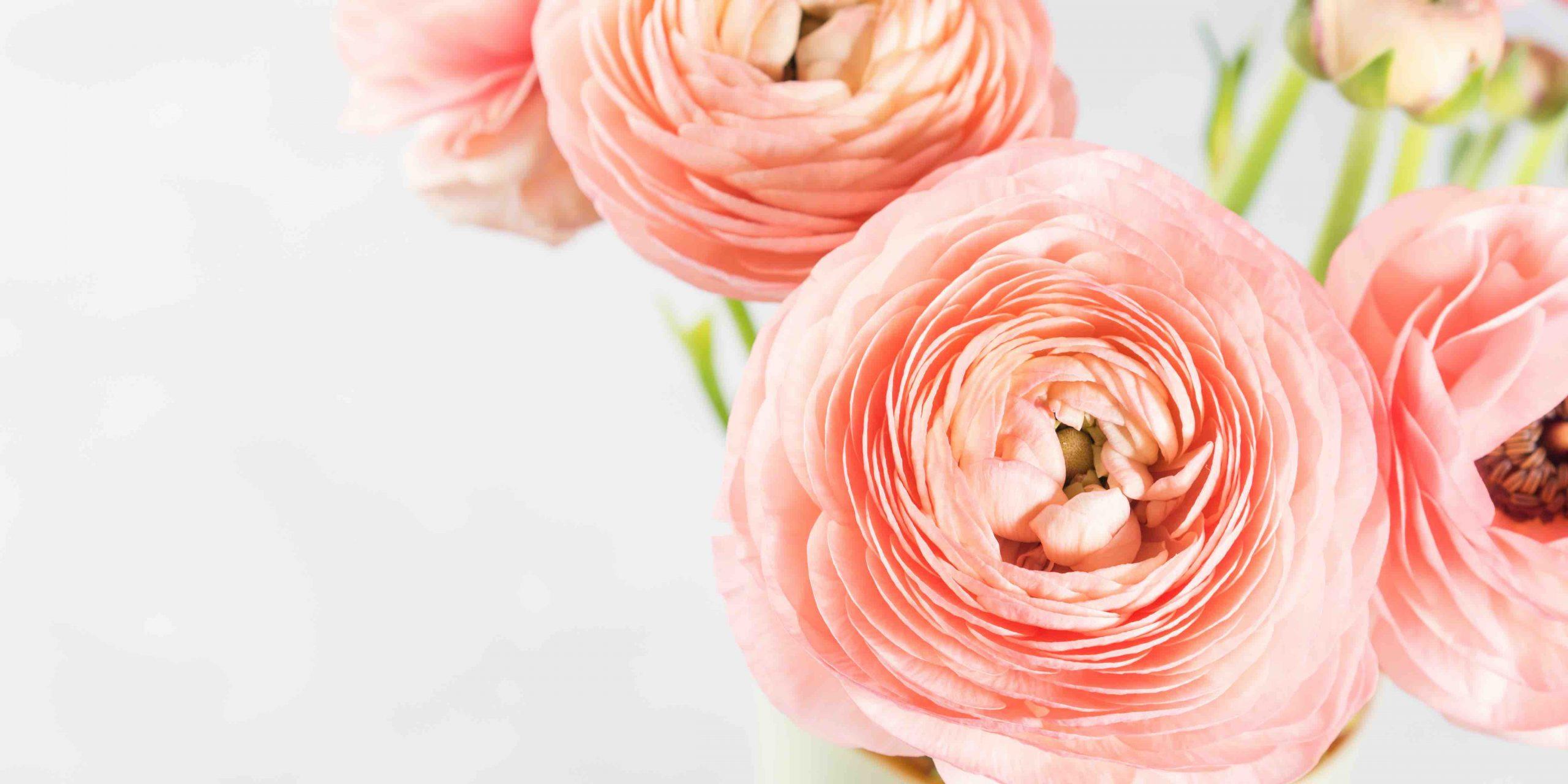 Beautiful pink ranunculus bouquet