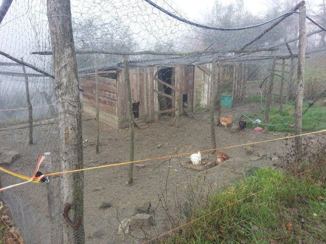 wwoof-italy-review