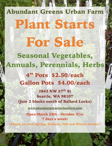 2016 Updated Plant Starts For Sale JPEG