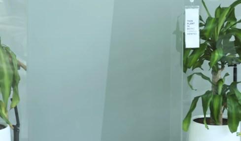 šikana rostlina experiment