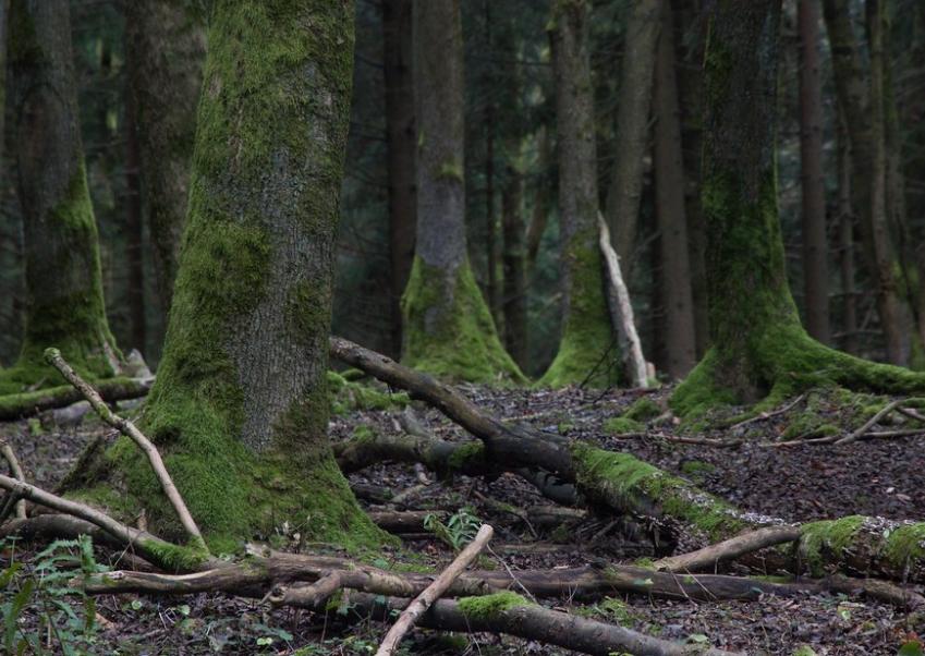 les nemohla zvěř