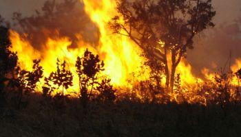 Acre é o estado com mais focos de queimadas em todo o Brasil