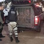 Festa do CV regada a álcool e drogas acaba com 23 detidos em delegacia