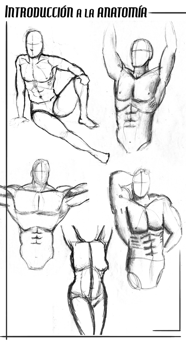 Post_introduccion_anatomia_2014_650pix