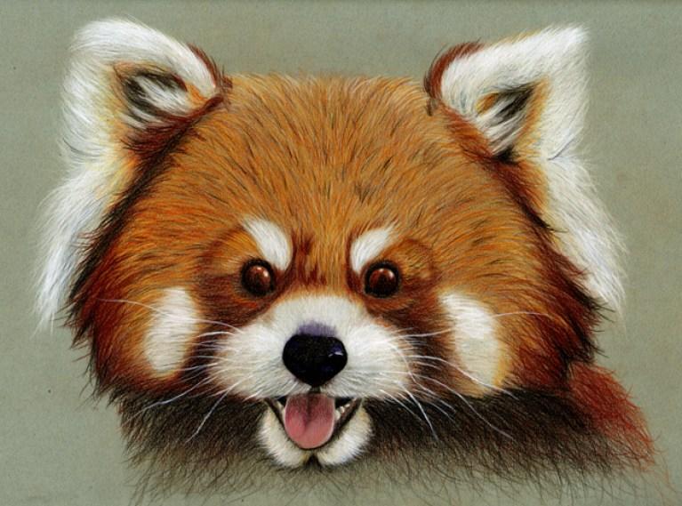 Panda rojo Jessica web