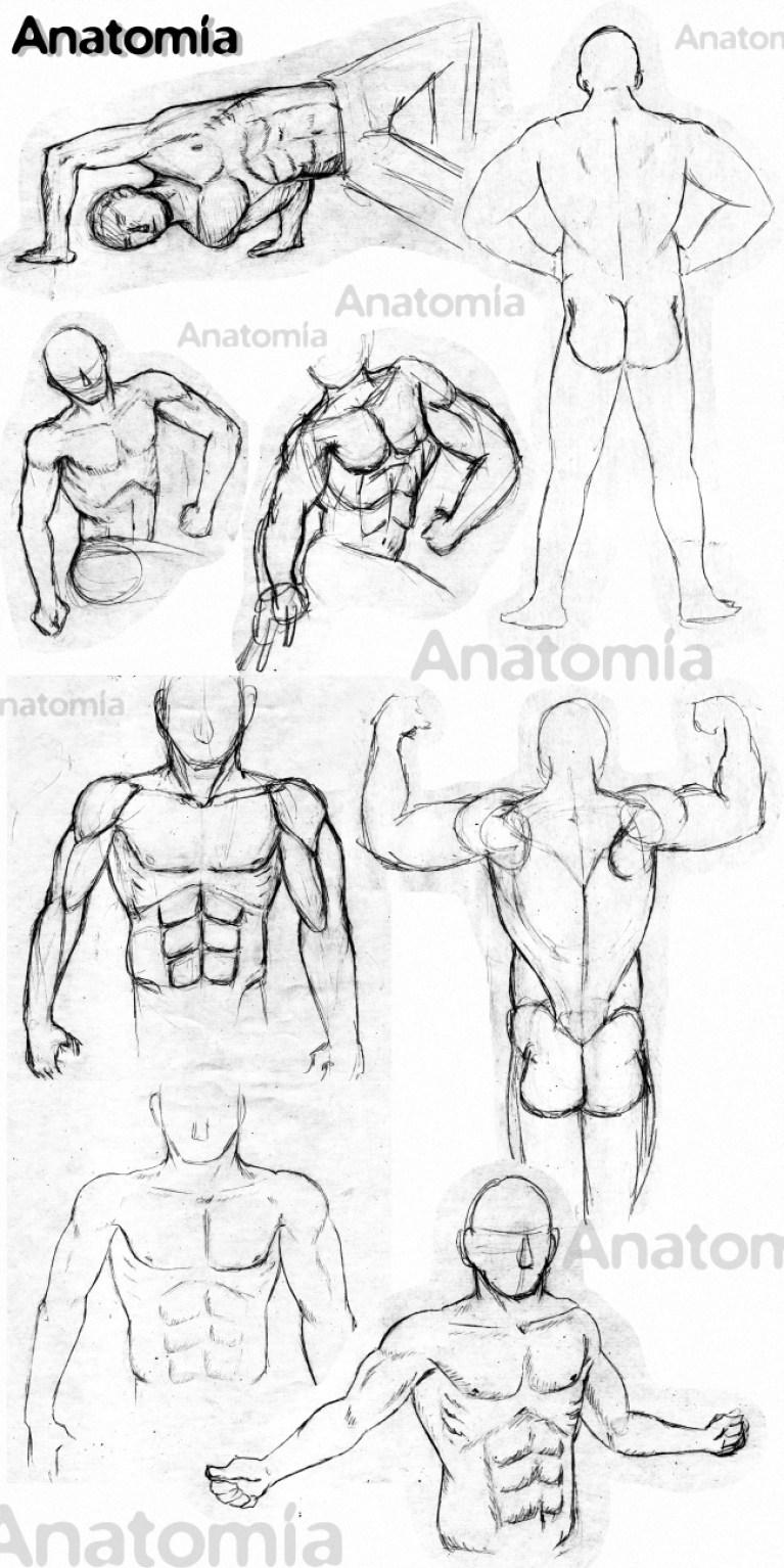 Estudiando anatomía en el Curso de dibujo profesional de Academia C10