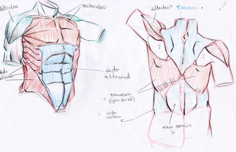 Documentación para las clases de anatomía en Academia C10