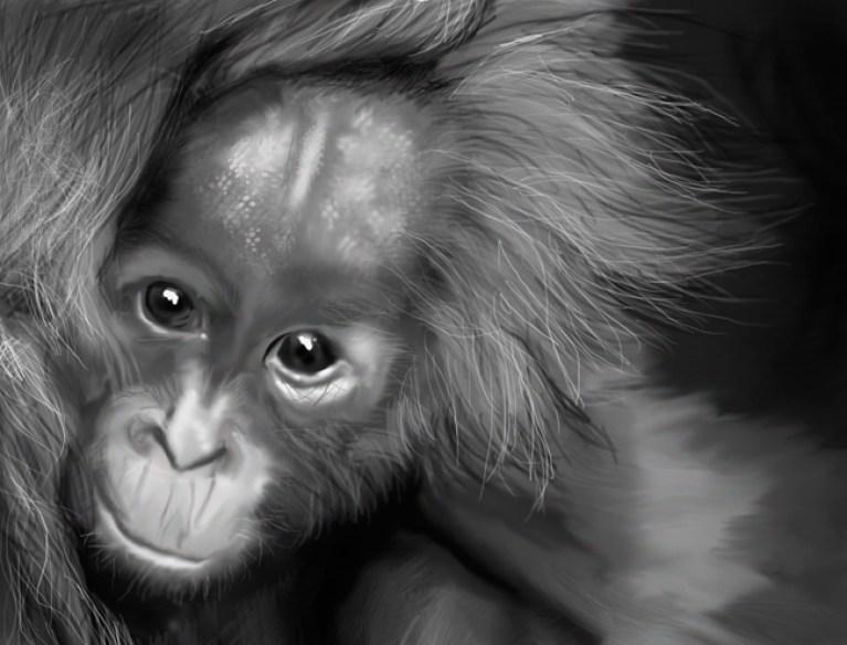 Práctica-5-orangutan2