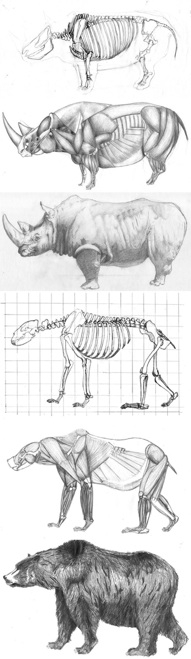 curso-dibujo-anatomia-animal