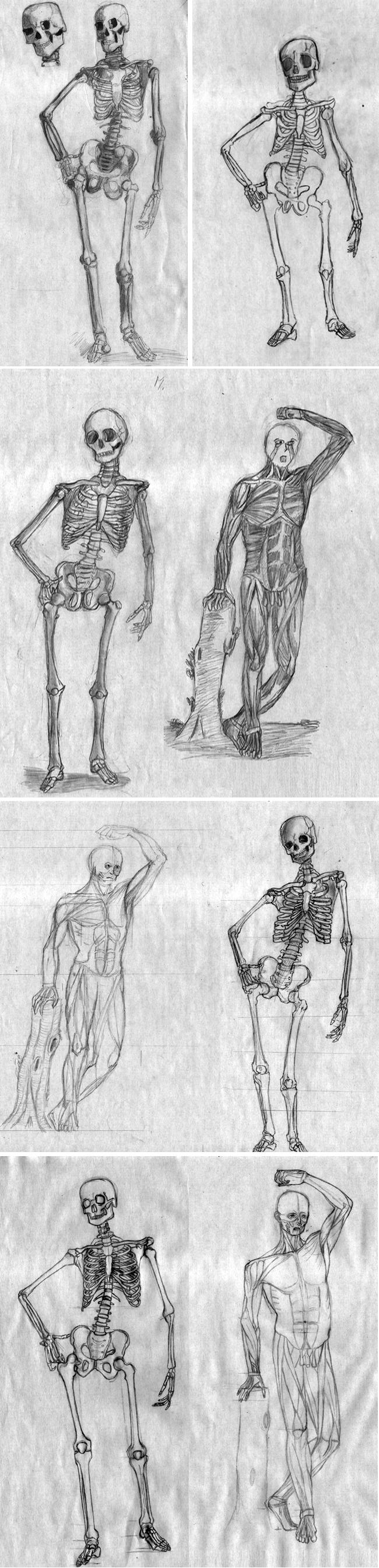 curso-comic-anatomia-animal-humana-dibujo3