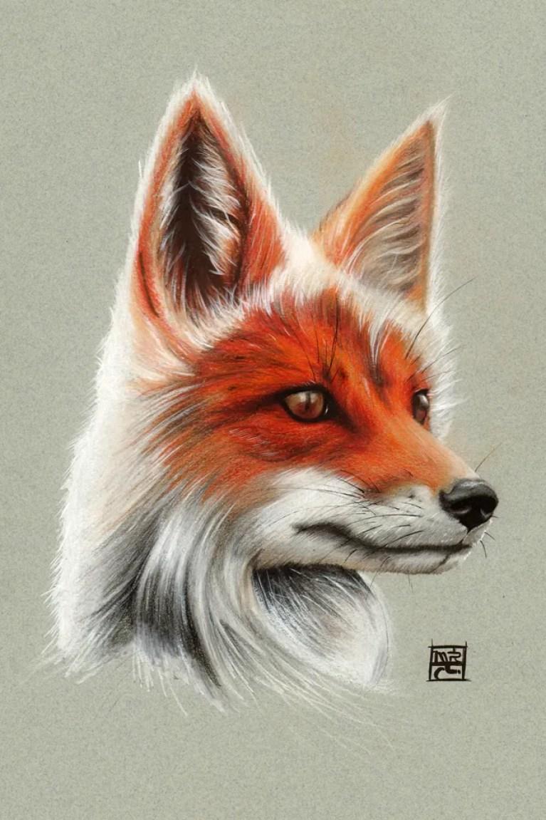 curso-ilustracion-tradicional-masterc10-lapices-colores-retratos-animales-1