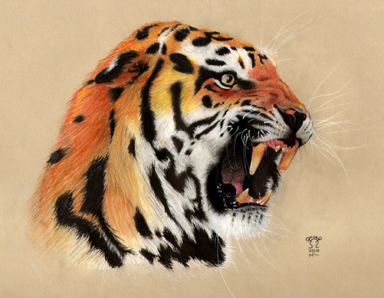 curso-ilustracion-tradicional-masterc10-lapices-colores-retratos-animales-tigre