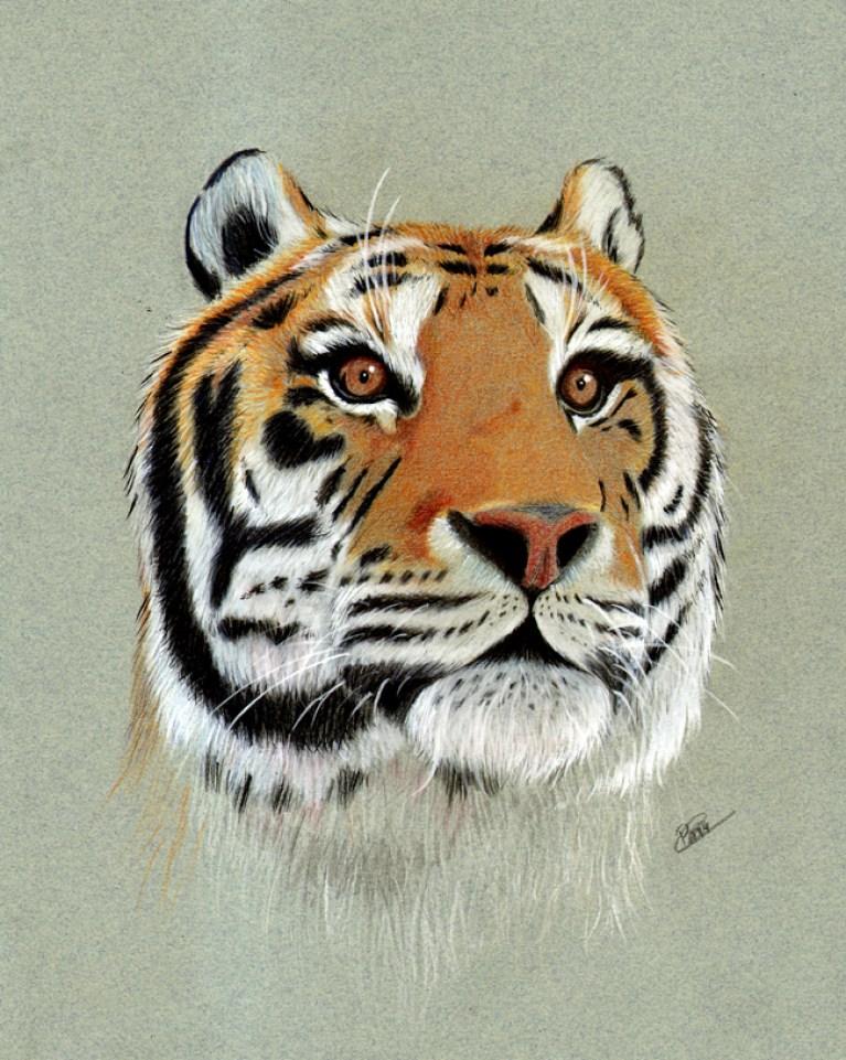 curso-ilustracion-tradicional-masterc10-lapices-colores-retratos-animales1