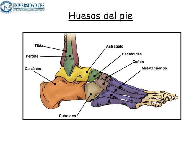 Huesos, manos y pies en el Curso de dibujo profesional en Academia C10