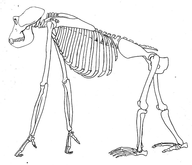 Curso de dibujo y cómic en Academia C10: anatomía comparada